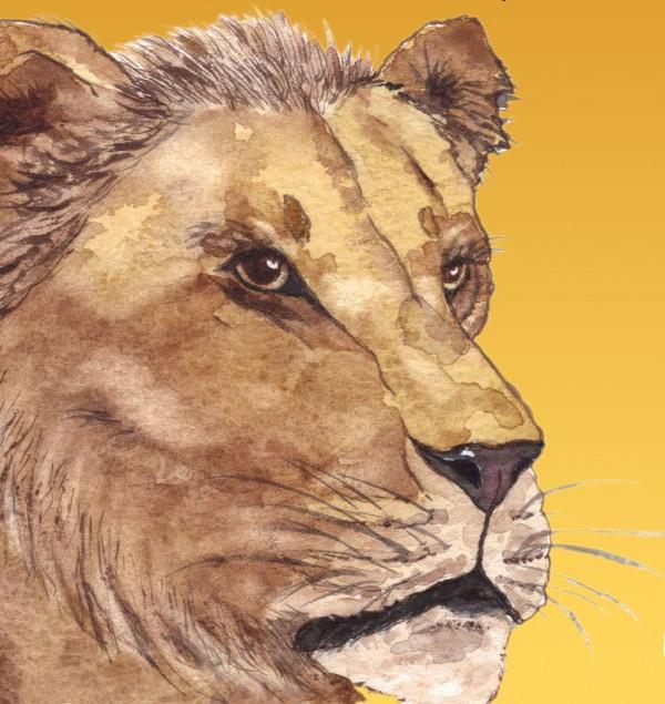 watercolour illustration of a lion's face