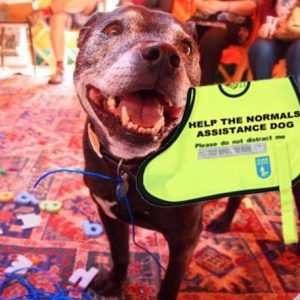 Badger the Help the Normals assistance dog