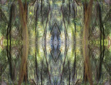 Digital image of trees reflected symmetrically
