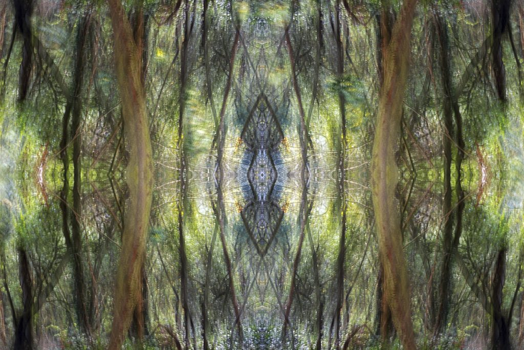 Digital image of trees reflected symmetrically