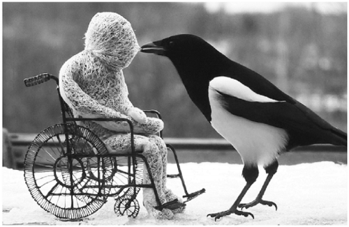 Magpie next to model of wheelchair user