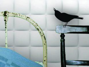 Cuckoo on a chair