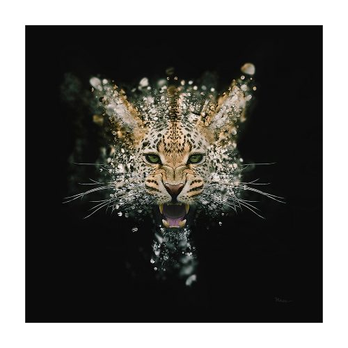 Mik Strevens' Leopard Face Dispersion