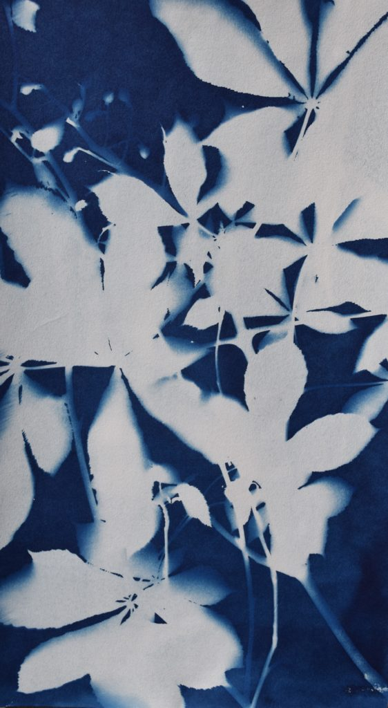 white leaf shapes against a dark blue background