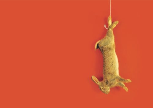 a rabbit hangs from a rope against an orange background