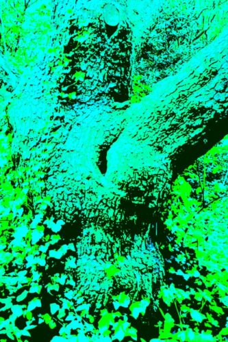 digital image of a tree trunk through a green filter