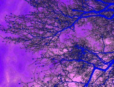 digital image of a tree through a purple filter