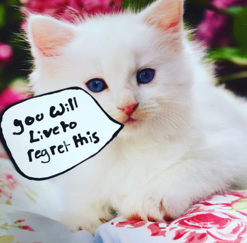 """A white kitten sits on a floral blanket. A speech bubble reads """"you will live to regret this"""""""