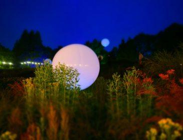 Weather balloon floating amongst bushes