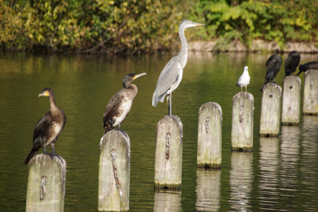 Birds perched on pillars in a pond