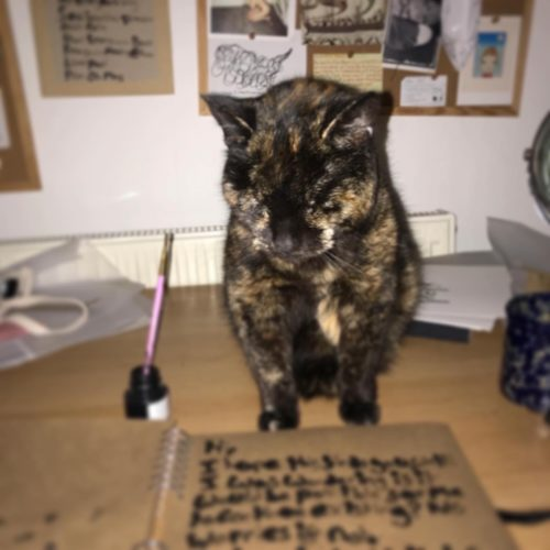 a tortoise shell cat sits on a cluttered desk looking over a sketch book next to a pot of ink with a paint brush upside down in it. Hand written text features in the book but cannot be read. in the background is a blurred notice board covered with assorted postcards.