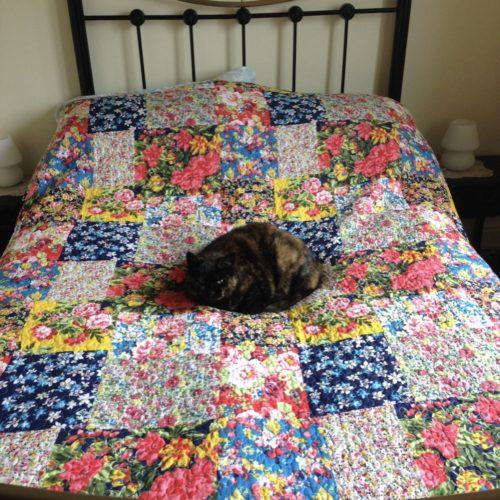 photo of a cat sitting on a bed