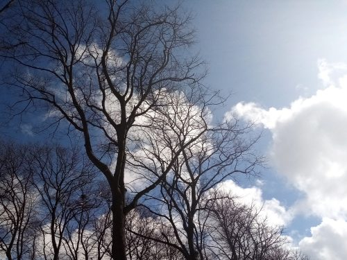 photo of a bare tree against a sunny sky