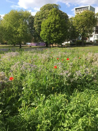 Photograph of an urban park, with poppies and trees and a block of flats in the distance