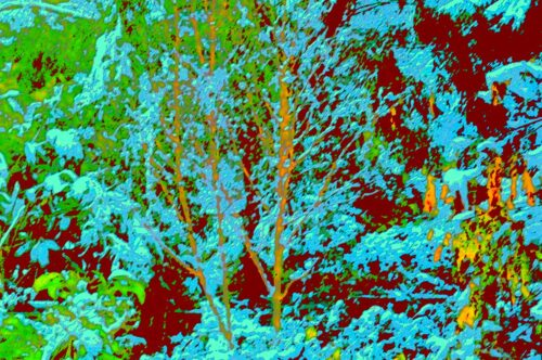 Manipulated photograph of bushes with inverted colours