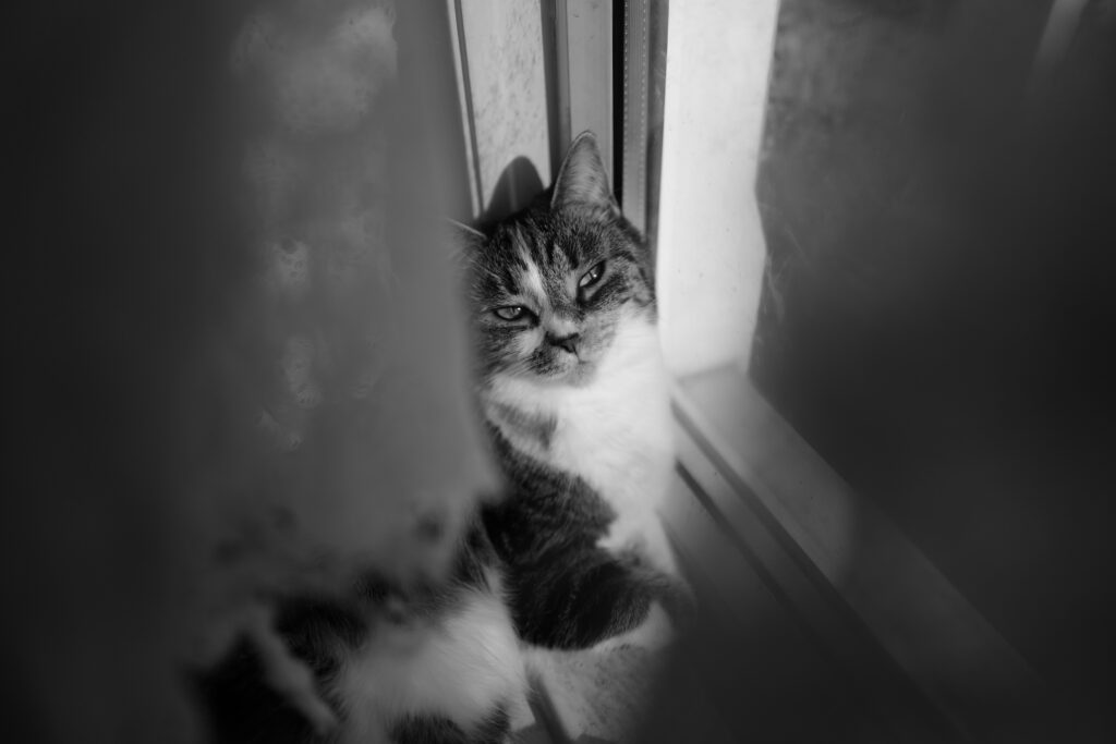 Black and white photo of a fluffy cat sitting by a window smiling at the camera