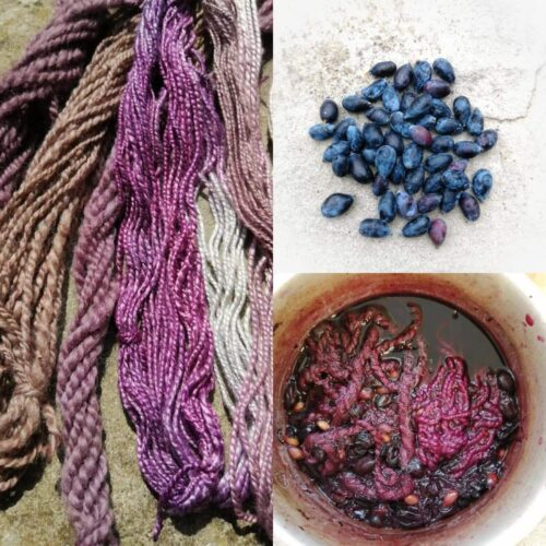 Composite image of dyed yarn, the berries used to dye it purple, and the process of it being dyed.