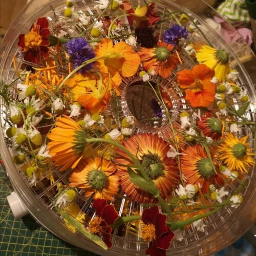 A flower press filled with colourful flowers