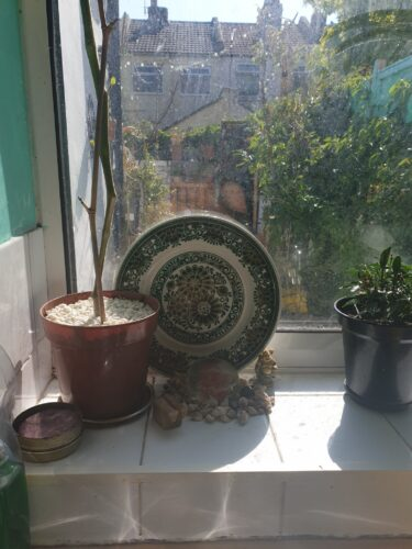 A windowshill with plants and a plate
