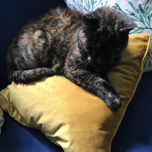 a tortoiseshell cat sits on a golden cushion