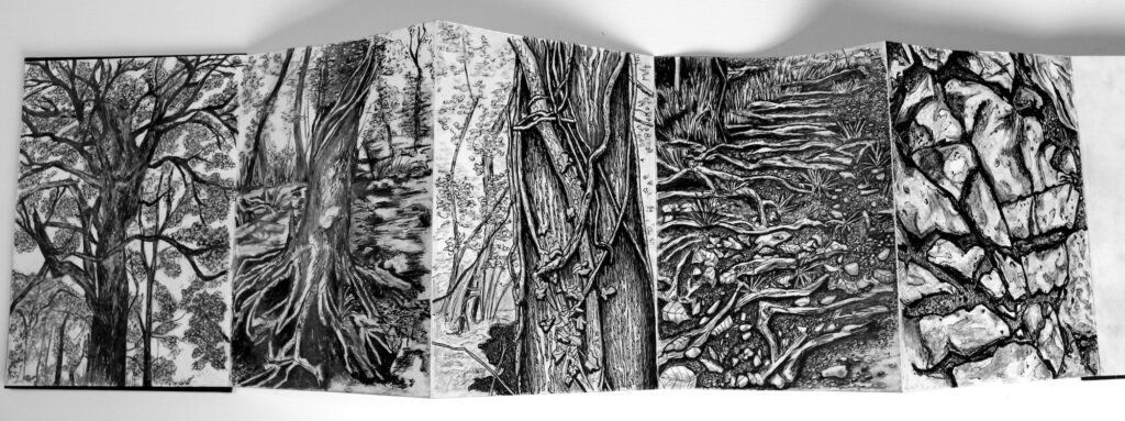 photo of artists' book depicting charcoal drawings of trees