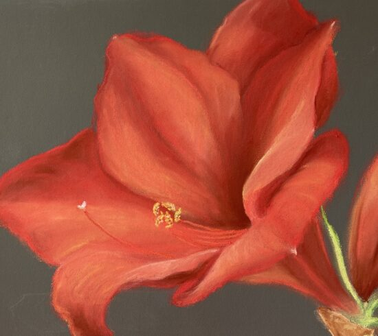 Pastel artwork of a red Amaryllis flower
