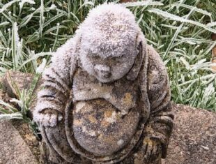 photo of a garden sculpture of the buddha