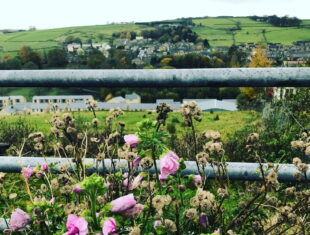 Photo of wild pink flowers in front of iron bars looking through to countryside fields and hills beyond
