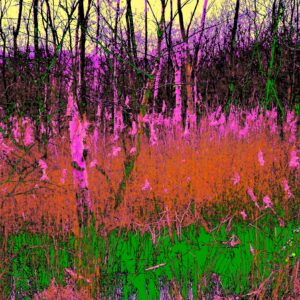 Photo of reeds and trees coloured in neon pink, orange & green