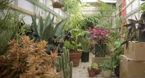 Screenshot of the inside of a tropical greenhouse