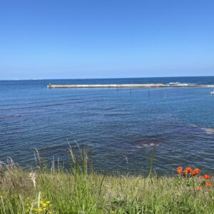 a clear blue sky and a startlingly still sea. In the foreground, the harbour wall overgrown with long grass and a clump of red poppies. In the distance a white lighthouse.