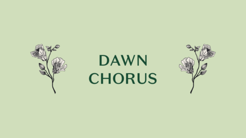Dawn Chorus in green text on a green background. White outlined flowers are either side of the text.